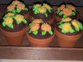 """Potted"" Jumbo Cupcakes. Suitable for all times of the year! Sprouts in spring, colourful flowers for summer, mums for autumn and pointsettias for Christmas"
