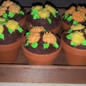 Autumn mums presented in terra cotta pots